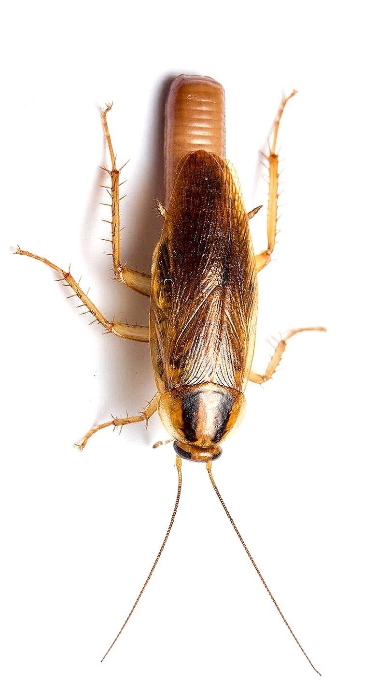 Our Services 360 Pest Management