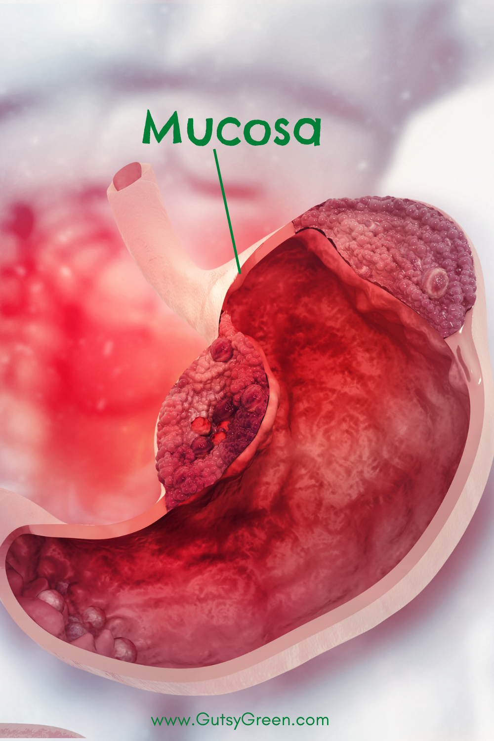 tums and mucosa.png