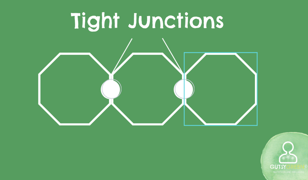 what are tight junctions?