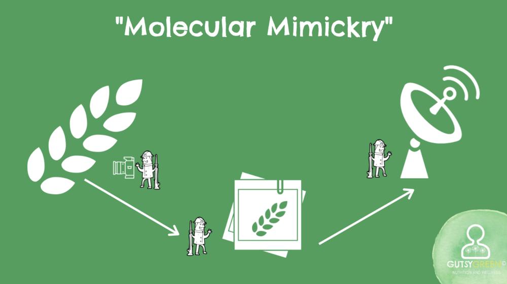 immune cell metaphors