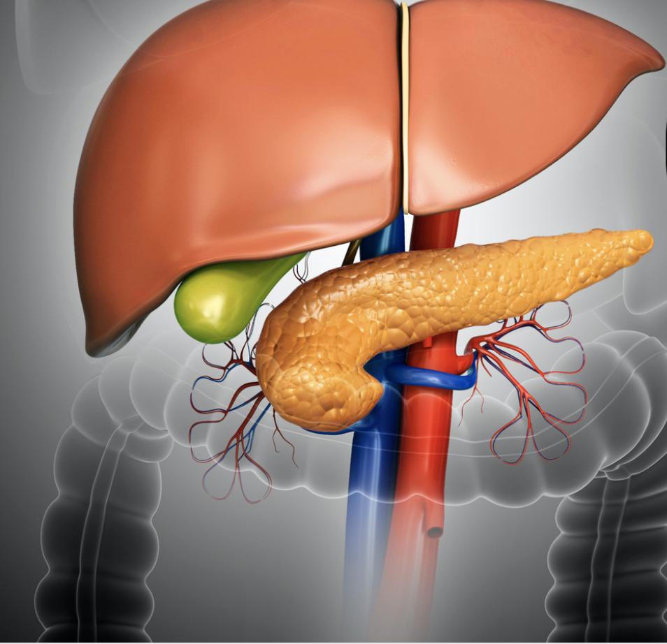 pancreas, liver, gallbladder