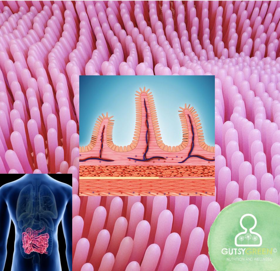 villi and microvilli in the small intestine