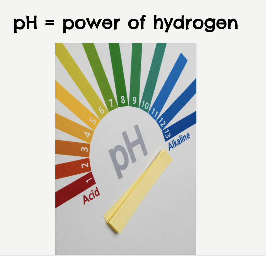 what is pH? and what does it have to do with digestion?