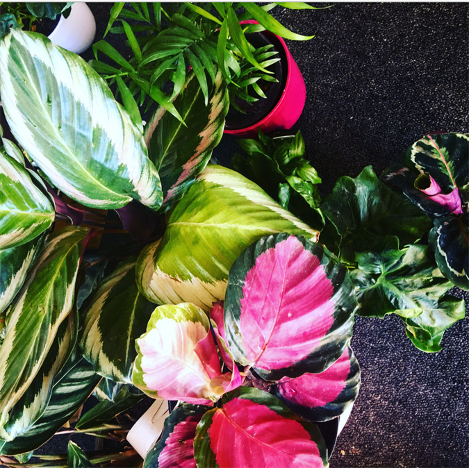 Breathe colour and life into your home, and breathe better as plants improve air quality