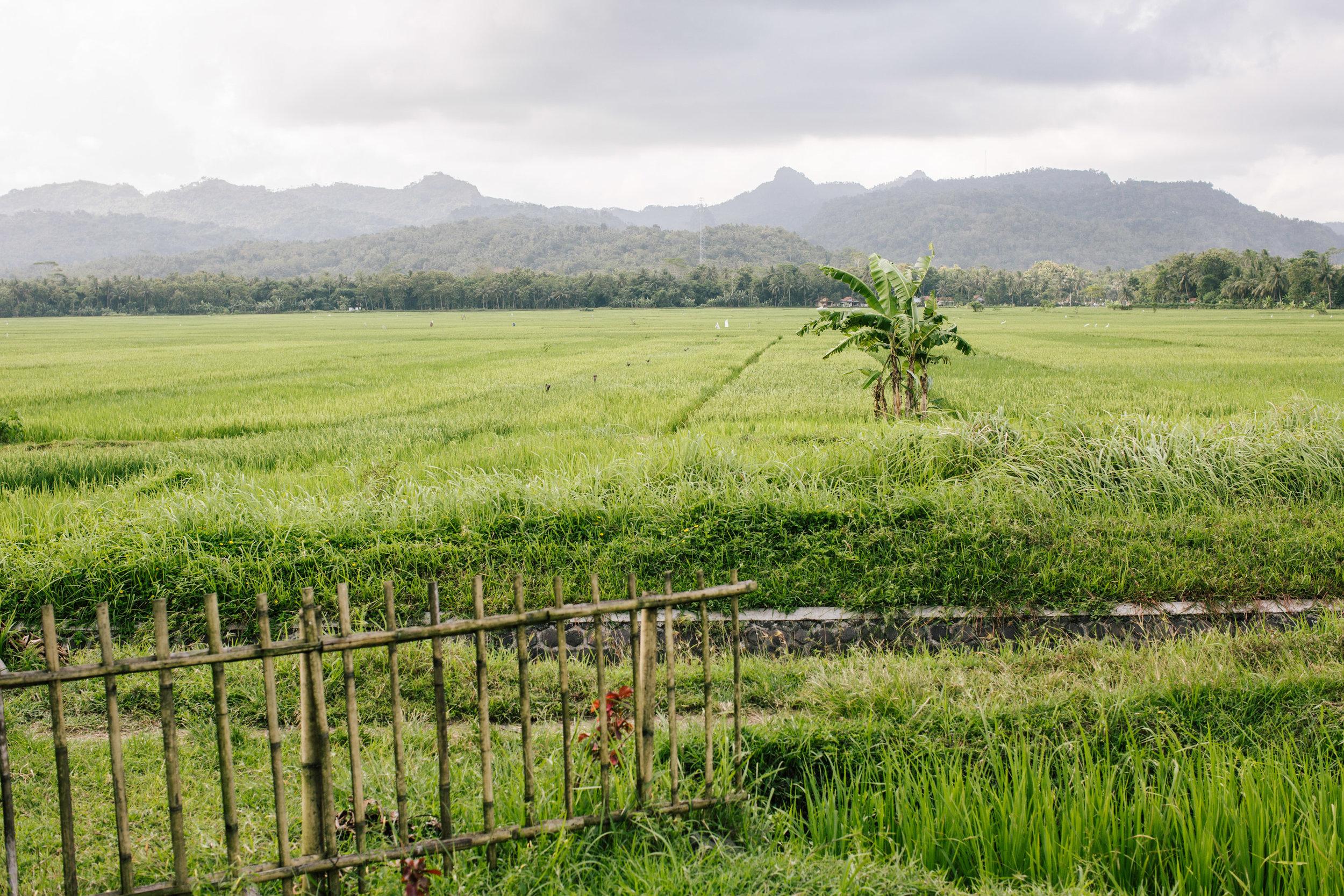 Agung Parameswara_Krakatau Express_18.JPG