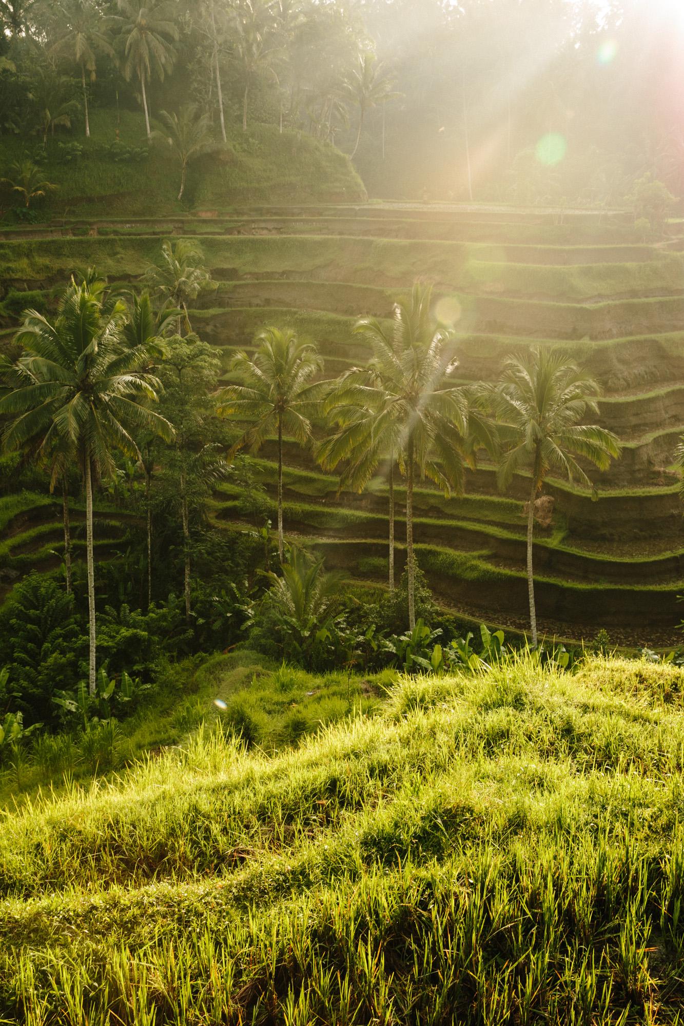 AGP_Bali_018.jpg