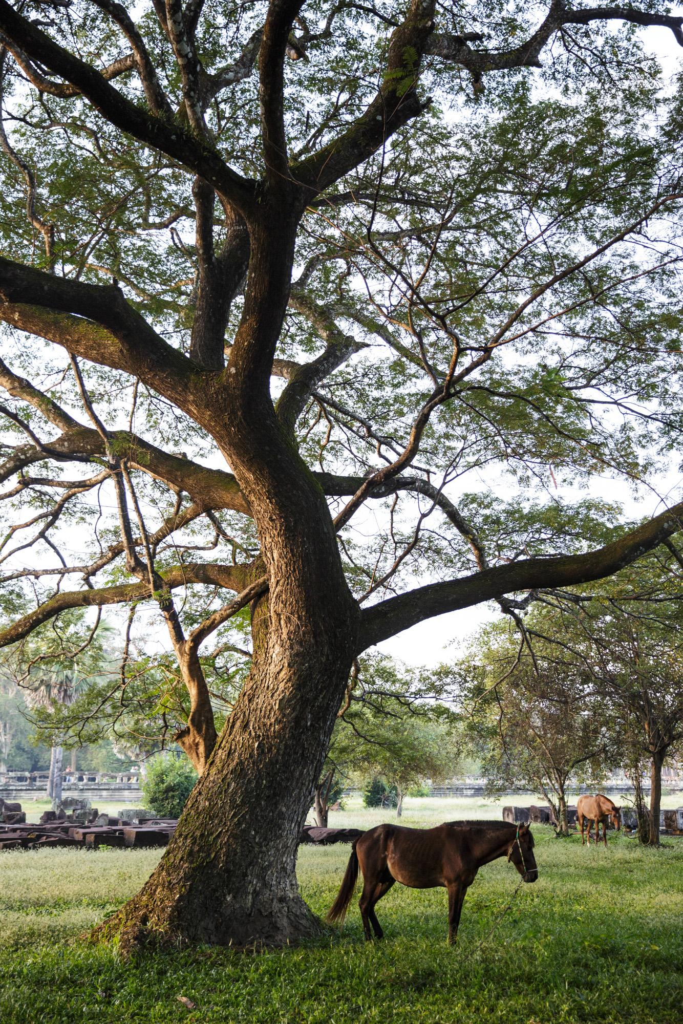 Angkor_agungparameswara_14.jpg