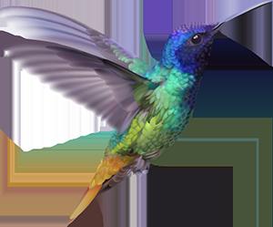 hummingbird300 rochelle gates.png