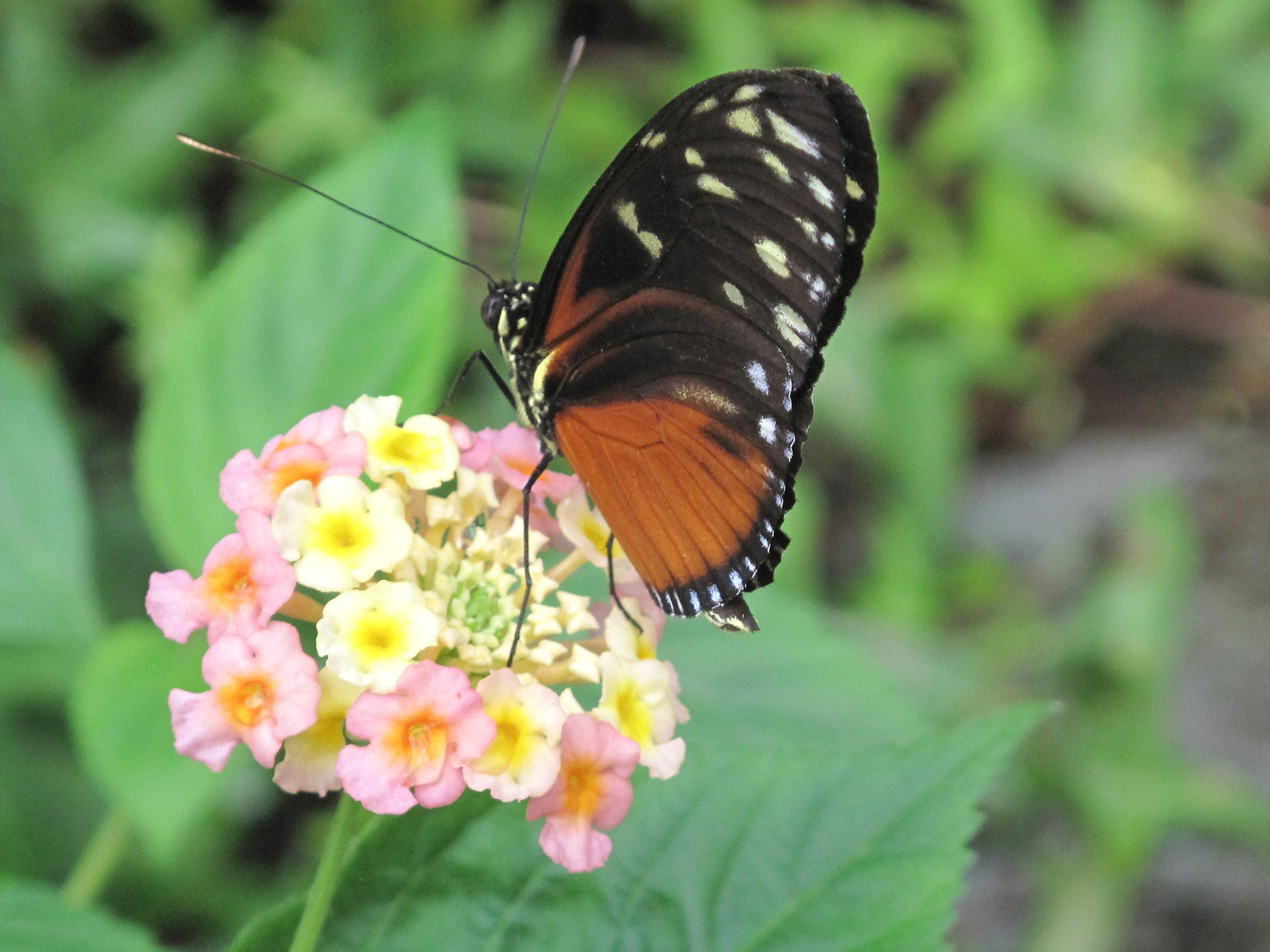 flower & butterfly.JPG