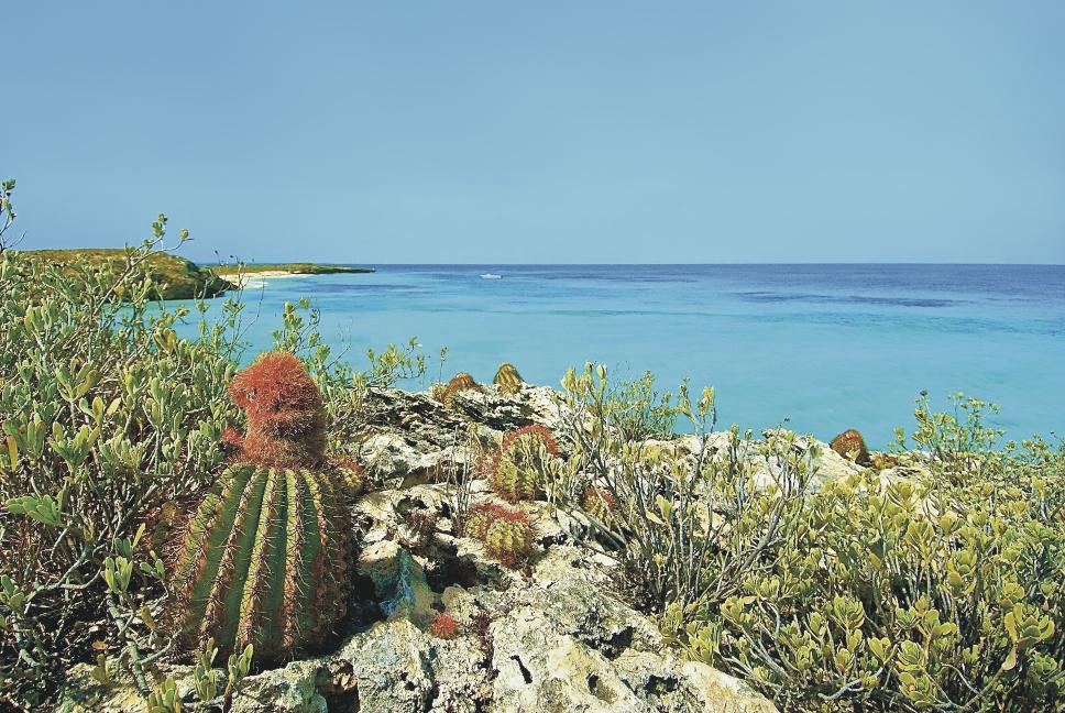Fish Cay Cactus KIM MORTIMER.jpg