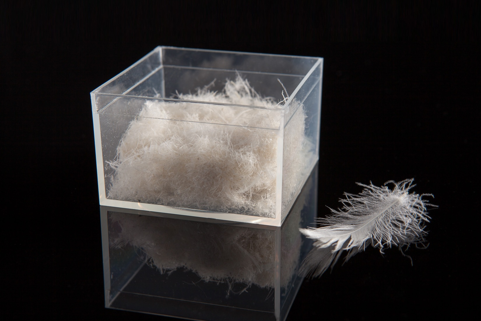 Our cleaning processes removes quill pith, fragments, trash, dust, dirt and other foreign matter from down and feather.