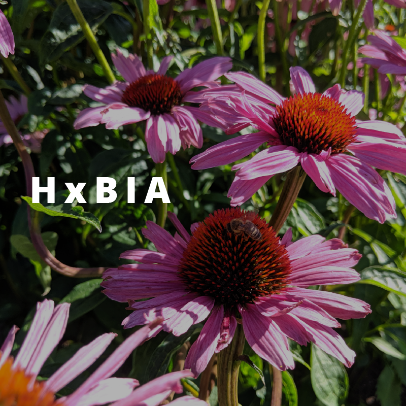 HxBIA   We work with the HxBIA to keep the trees and shrubs in artist- decorated cement planters along Main and Hastings, beautifying and greening the DTES, building community pride while providing habitat, forage and connectivity for pollinators, and meaningful work for people.