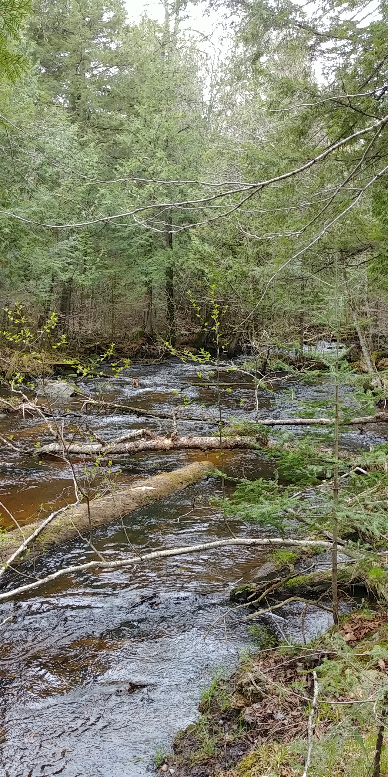 Creek in the Menominee Forest