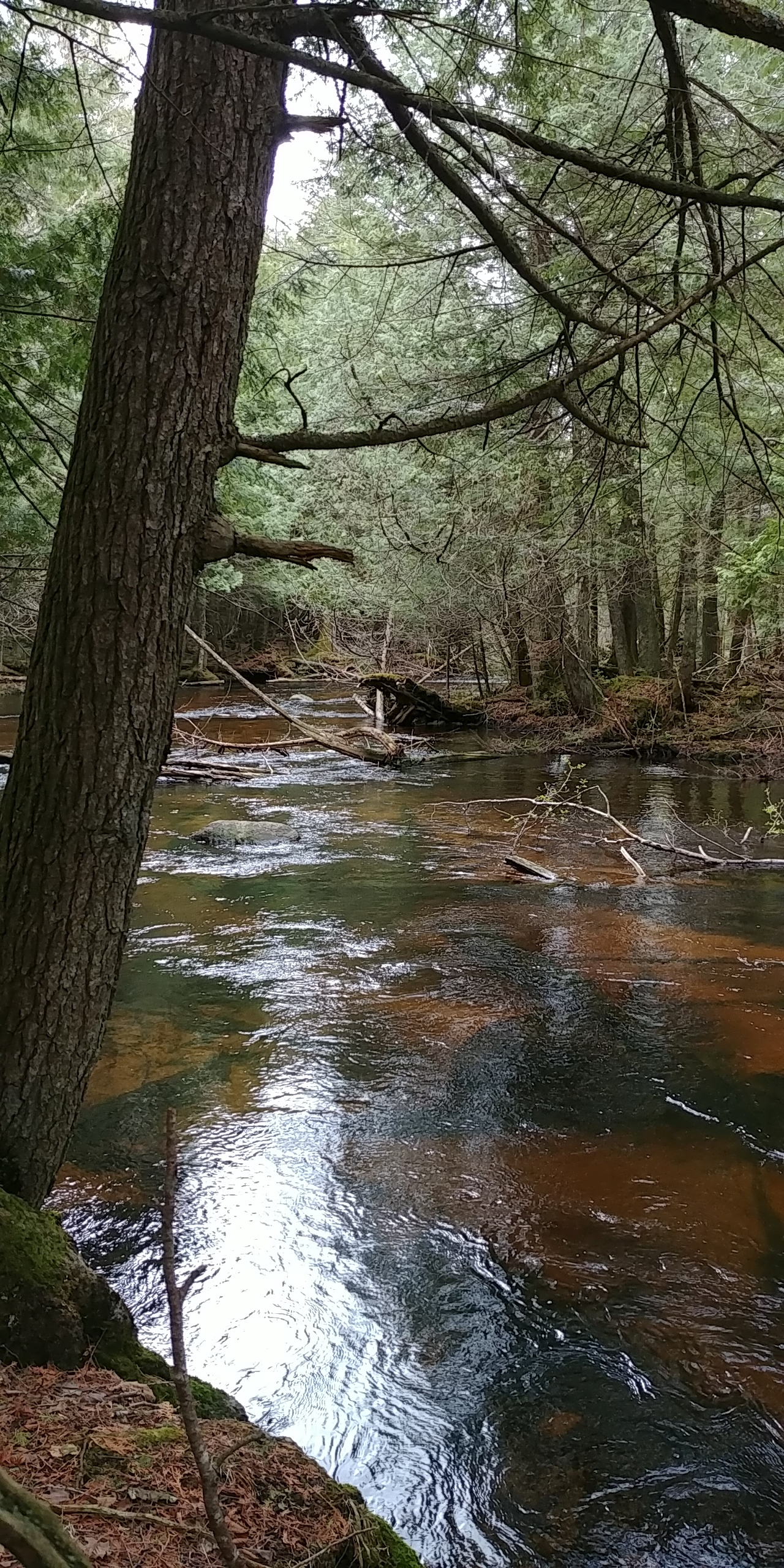 Larger stream in the Menominee Forest