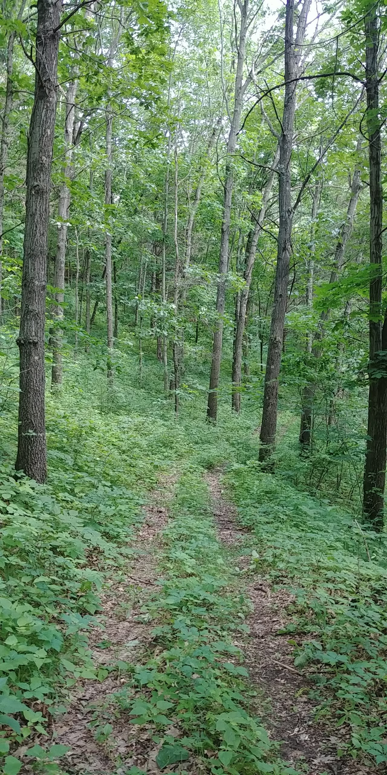Trail in our woods in Spring Green, WI