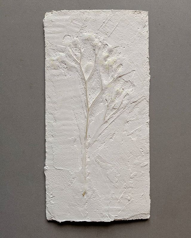 Experimenting with flowers embedded in plaster for an upcoming project. . . . #plaster #flowers #flower #babysbreath #white #plasterdesign #architecture #design #fabrication #interiors #interiordesign #art #plasterart #brooklyndesign #brooklyn #nycdesign #boltdesigngroup