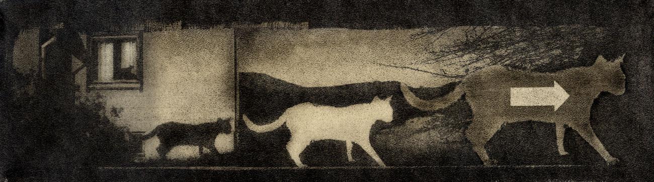nero-cats-gumoil-uten-ramme-morten-haug-art-kunst-norsk.jpg