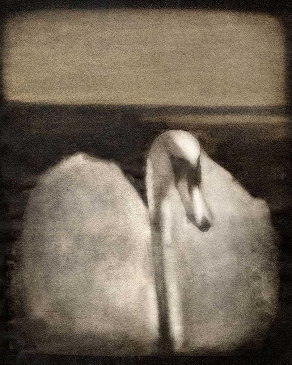 swane-gumoil-morten-haug-gumoil-fotokunst-teknikk-photography.jpg