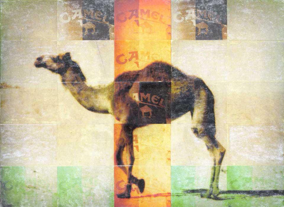 """ Camel """