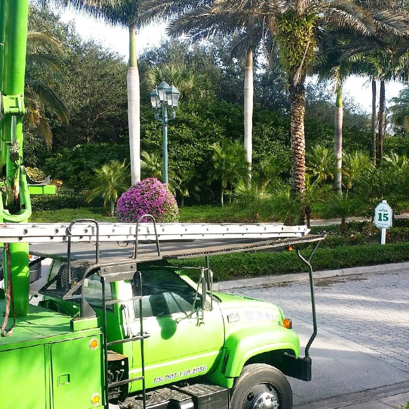 Our Mission - We care deeply about the integrity of our surrounding communities & the health of the trees that help them thrive. Perkins Tree has been providing Arboricultural Services to South Florida for over two decades. We aim to provide you with hassle-free tree services for your commercial or private development.