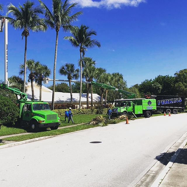 Enjoying the break in the humidity on Bear Island here in West Palm Beach today. Looking forward to some incredible weather in days to come. #Bearisland #westpalmbeach #fallweather #treeservice #palms #perkinstree