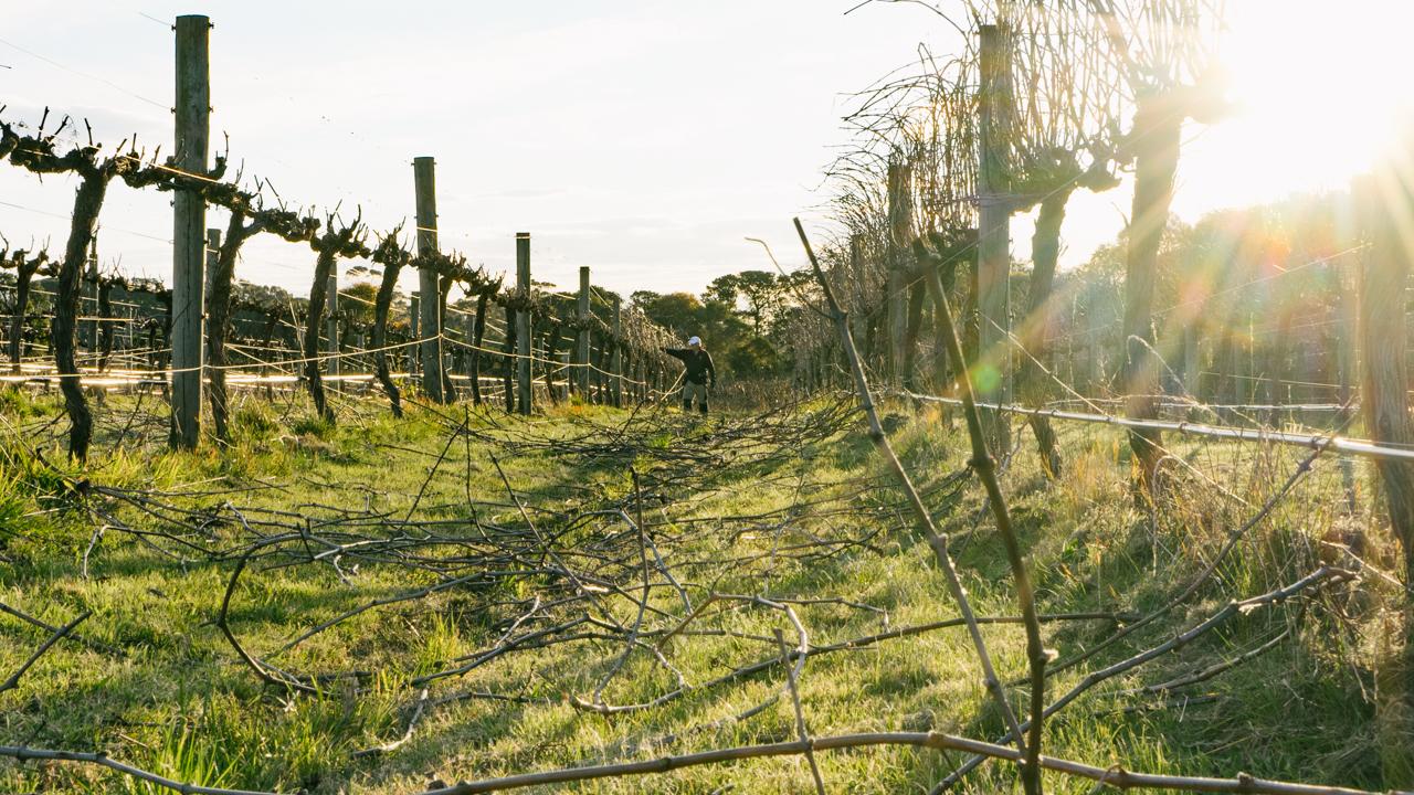pruning-the-vines.jpg