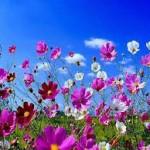 flowers-150x150.jpg