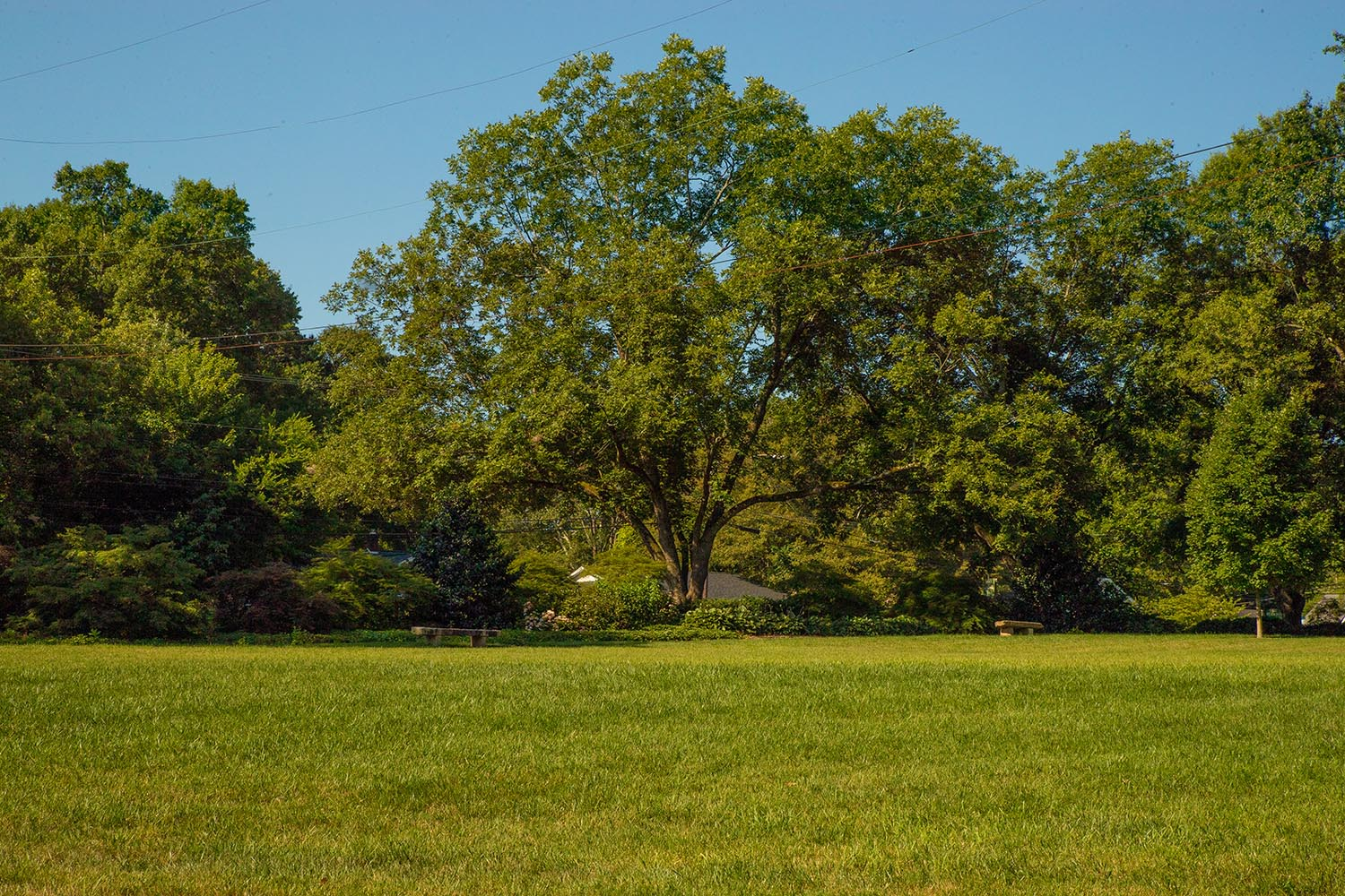 The Park - A spacious grassy lawn, perfect for larger events.