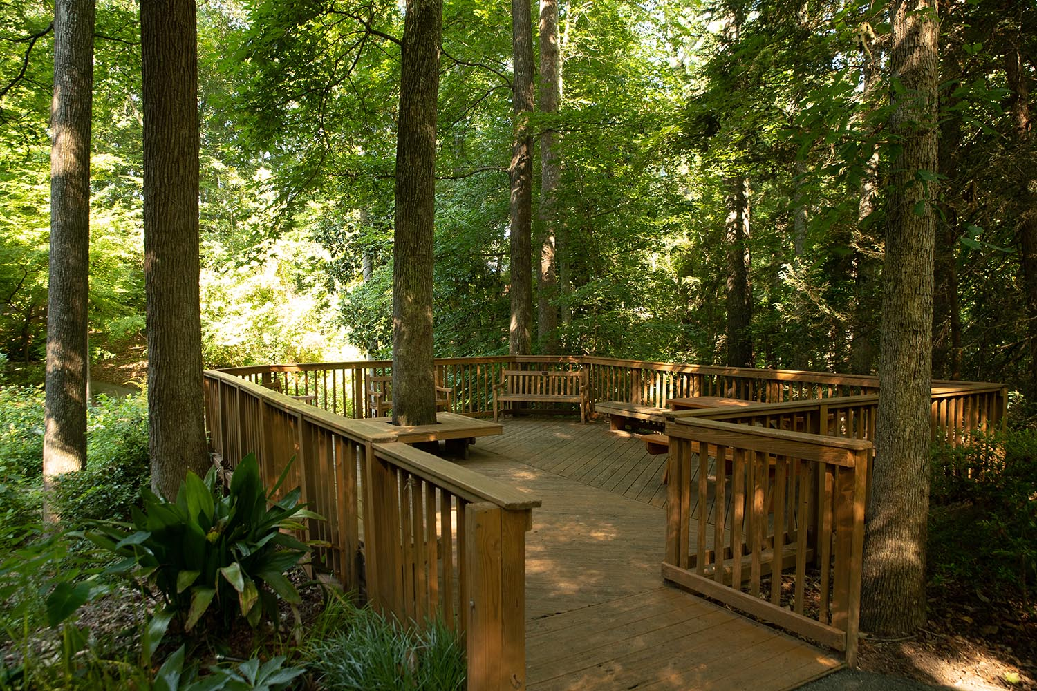 Observation Deck - Located deeper in the woodland and enclosed by trees that gently filter sunlight.