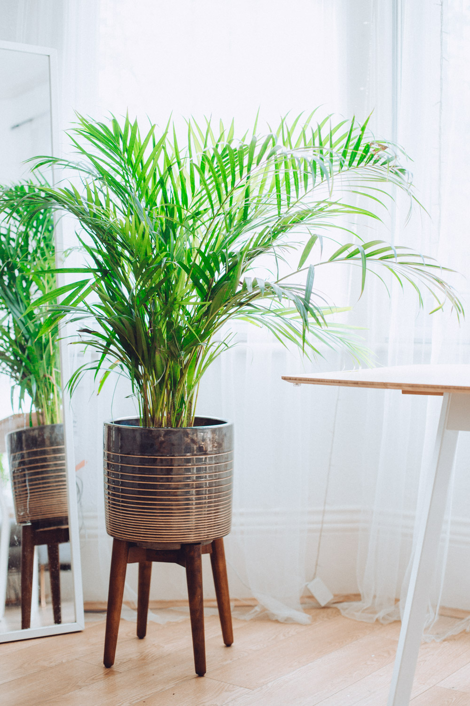 west elm patterned wood leg planter