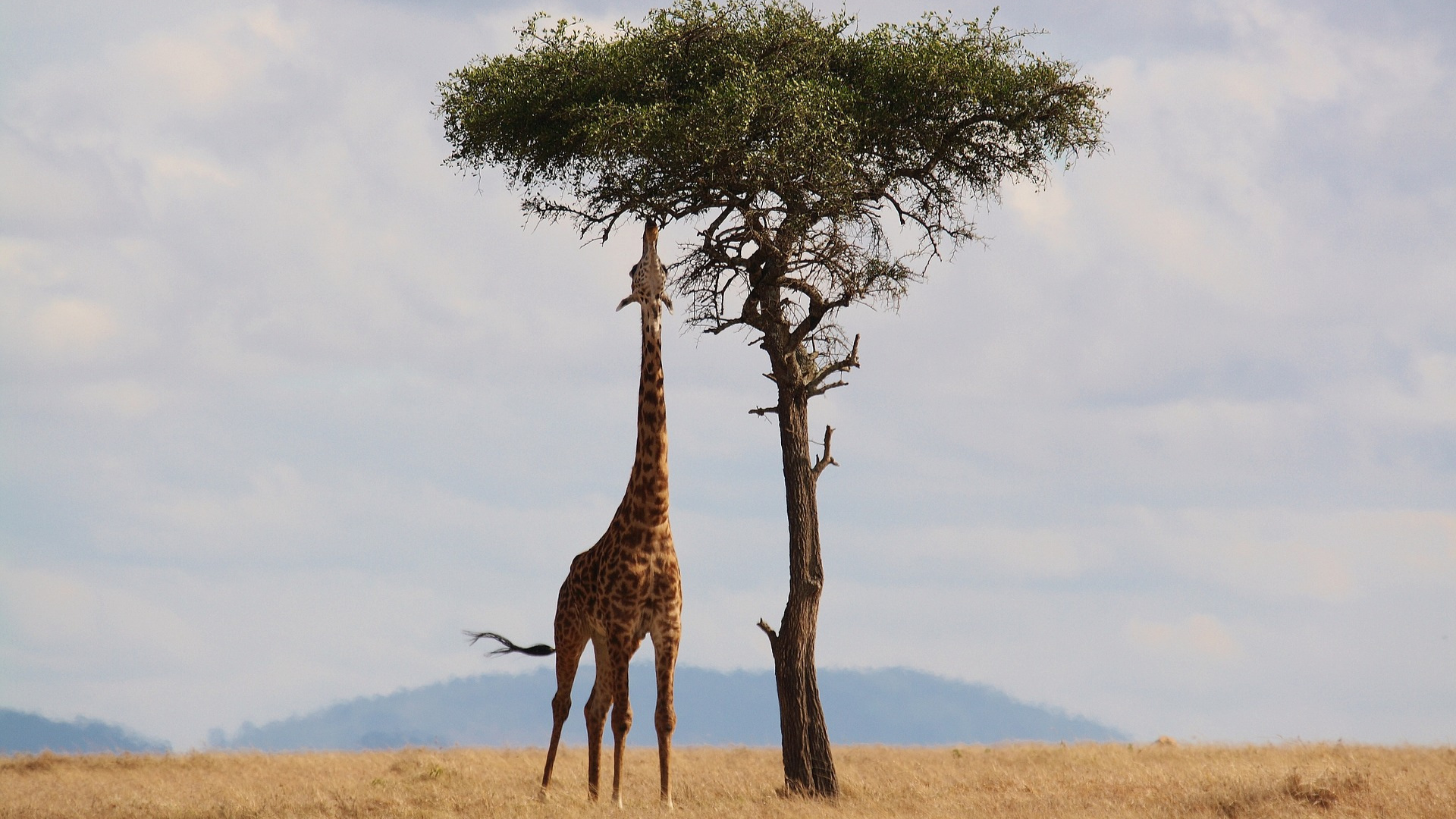 16-day Kenya & Tanzania: The Safari Experience