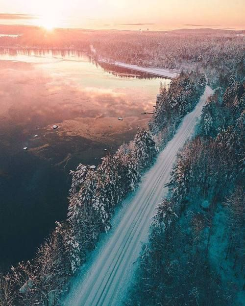 Sustainability article. Image of Swedish road surrounded by forests