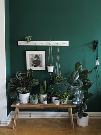 Plant paradise: Laura's beautiful plant corner!