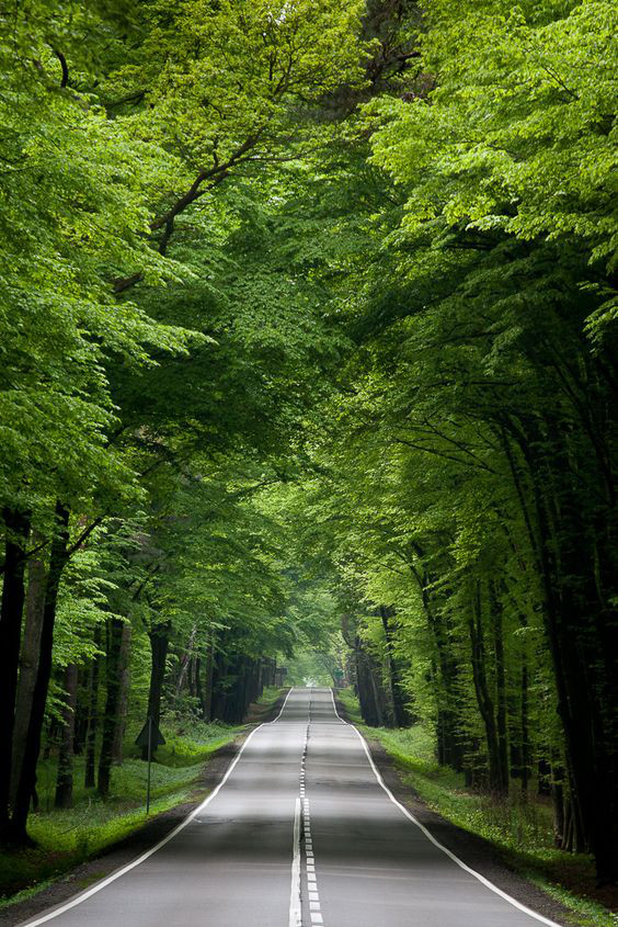 Sustainability hacks. Image of Polish forest.jpg