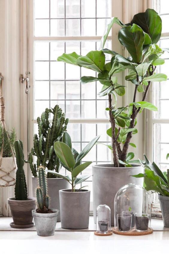 scandi-plants.jpeg