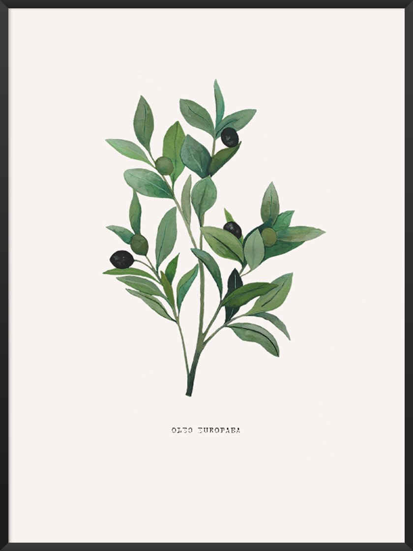 Perfect for your kitchen - Olea Europaea Poster.