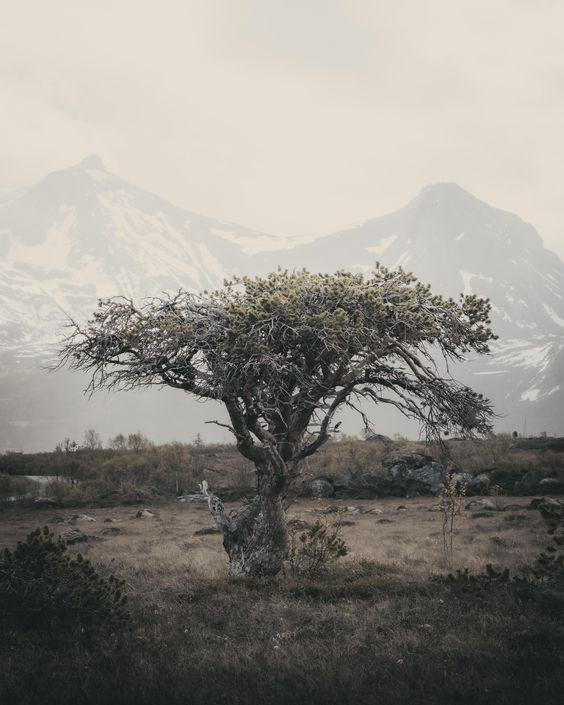 Planting trees article. Image of lone tree.jpg