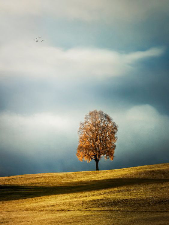 Planting Trees article. Image of tree on its own with autumn colours.jpg