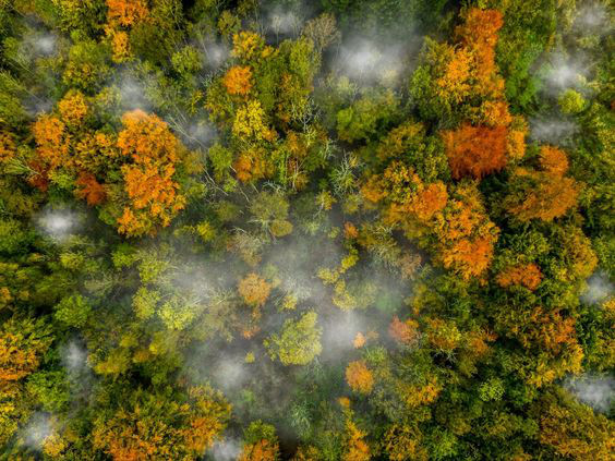 Planting Trees article. Image of forests from above.jpg