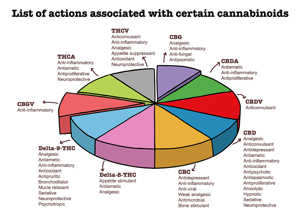List of actions associated with certain cannabinoids.jpg