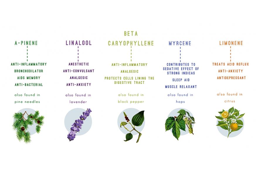 terpenes-found-in-cannabis.jpg