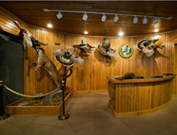 National Wild Turkey Federation's Winchester Museum - The world's only museum dedicated to the history of wild turkey hunting and conservation in North America, the Winchester has exhibits such as an extensive collection of turkey calls and dioramas of the five species of wild turkey.