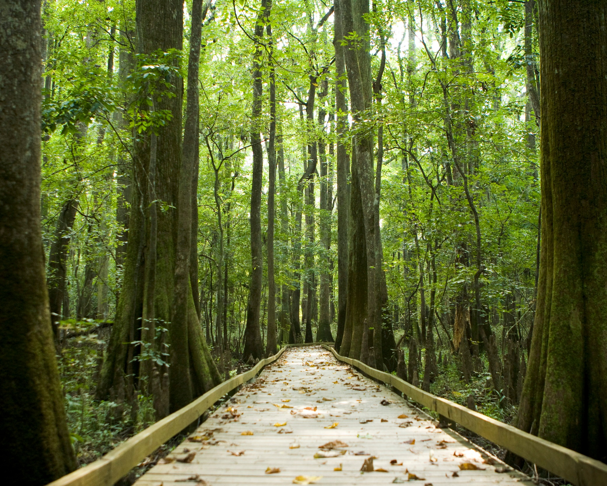 Congaree National Park - You'll fall in love with the great outdoors when you visit the state's only national park. Once there, you'll find canoe trails and 18 miles of trails that are perfect for hiking. Come and experience this patch of perfect South Carolina wilderness.