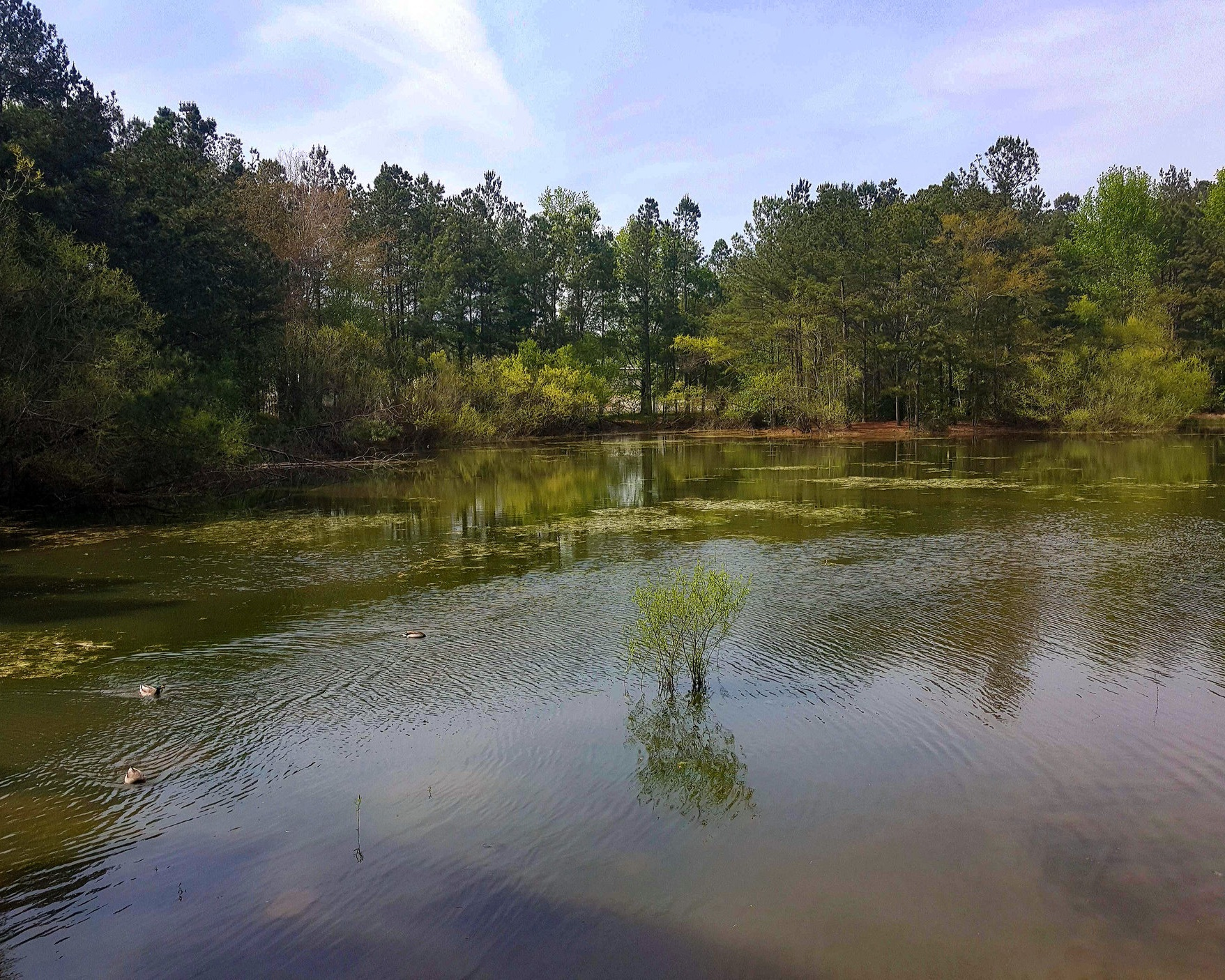 Carolina Bay Nature Resort - This isn't any ordinary city park. Housed within is a natural wetland that has seen minimal improvements. What you will find is maximum tranquility. So, take a walk on the trail, spend some time with the wildlife and just enjoy the peace and quiet of the woods.