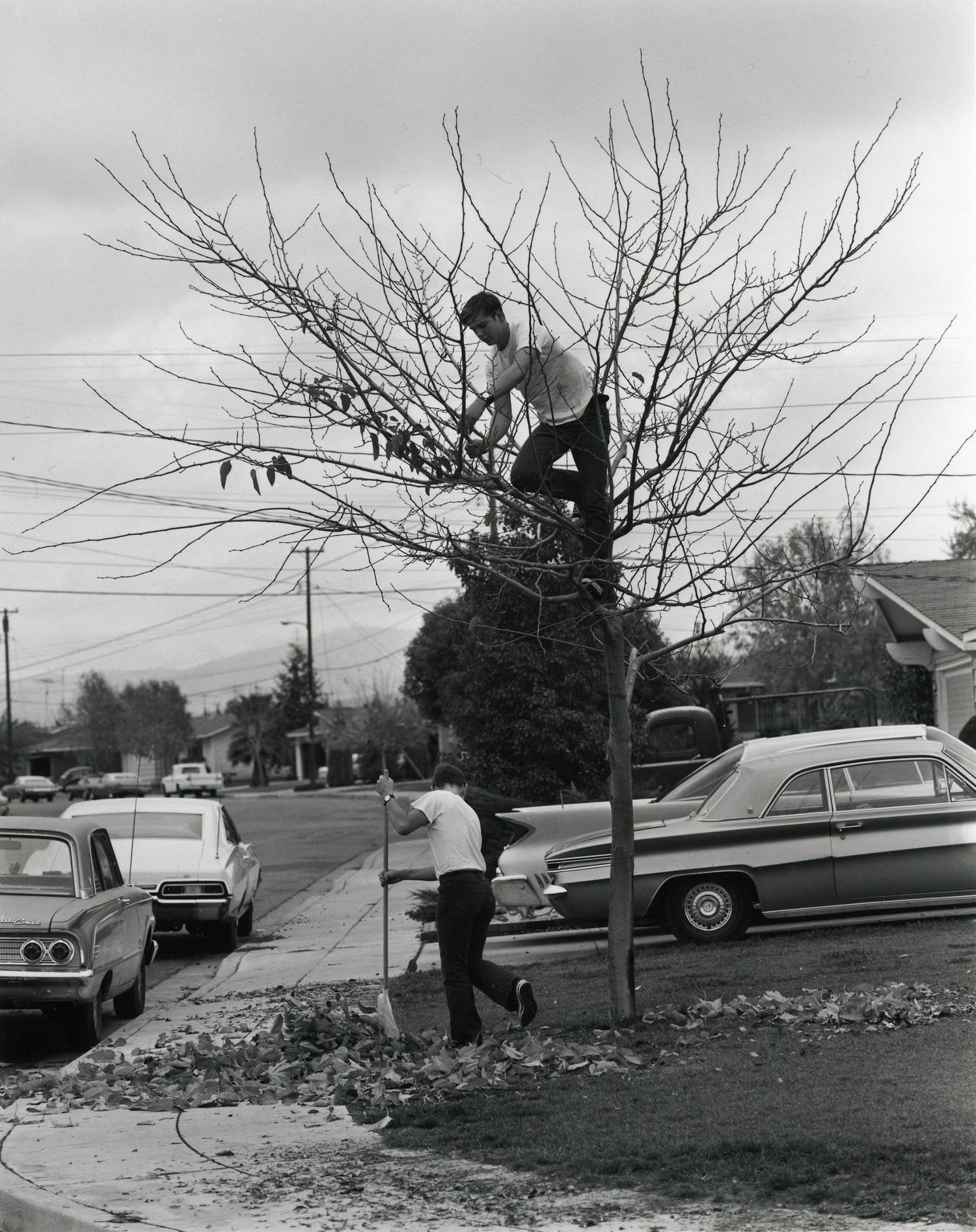 "Bill Owens: His Blue Suburban Skies - Winter, 2019 (Text)One photograph in Suburbia, Owens's now classic documentation of American bedroom communities in the early 1970s, a young man climbs up a tree, plucking the few remaining dead leaves. ""My dad thinks it's a good idea to take all the leaves off the tree and rake up the yard. I think he's crazy,"" the caption reads. He is crazy. It's an absurd task and a fitting metaphor for the idealized American dream the family is striving to attain. ""This book is about my friends and the world I live in,"" writes Owens, in the introduction to Suburbia. The world he photographs is strange. It's mundane, caught up in everyday routine, in the pleasures of material and social wealth, and in the vague promise of a nebulous guaranteed happiness. But the photographs are not judgemental, they are simply self-aware, conscious of the drama present, but also of things clearly absent. And while not unique to the suburbs, the setting isolates and exposes certain contradictions about American life, especially in the context of the social and political turmoil in the country at the time… [Read more]"