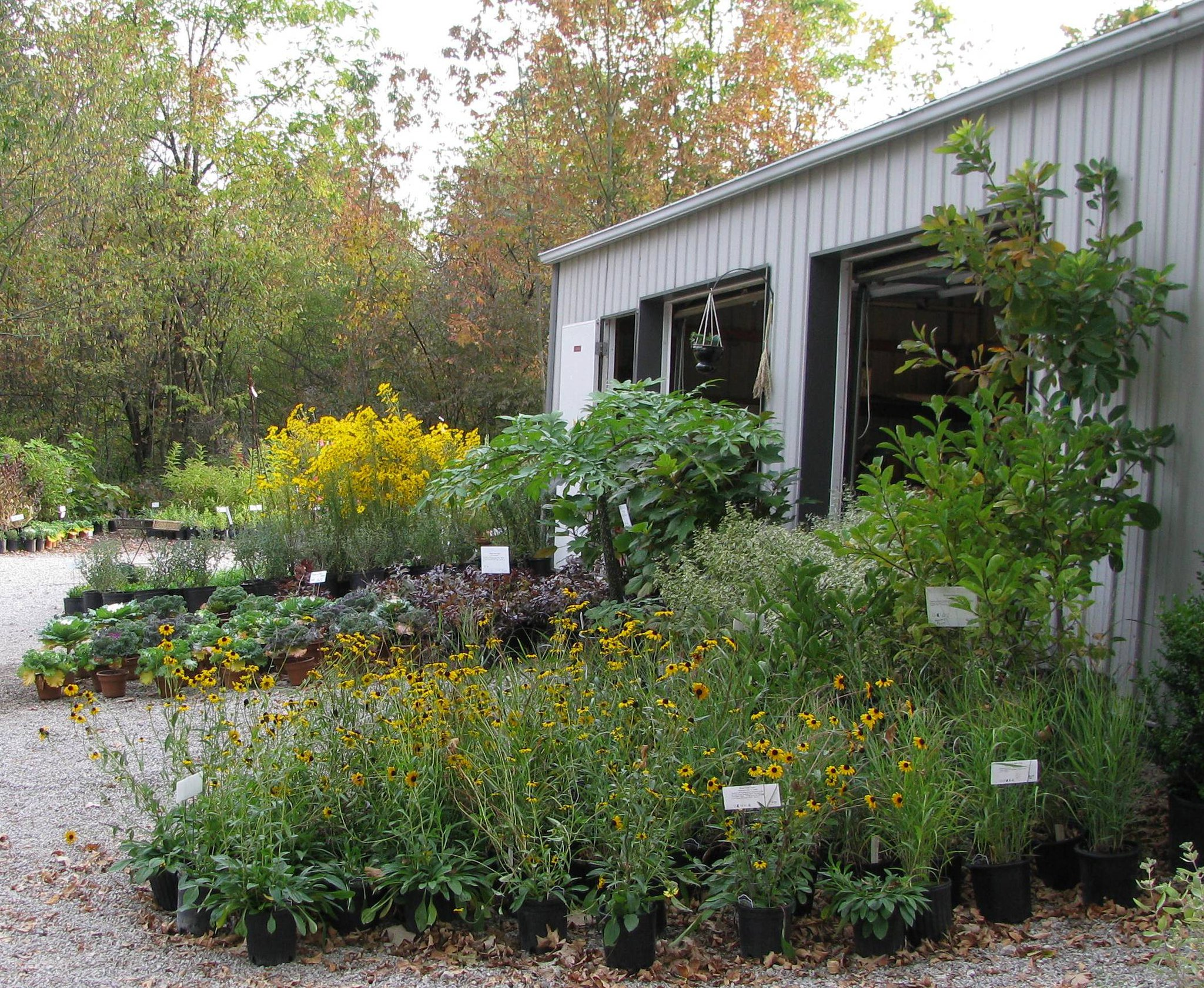 PLANT AVAILABILITY^ - Come visit the Gardens!