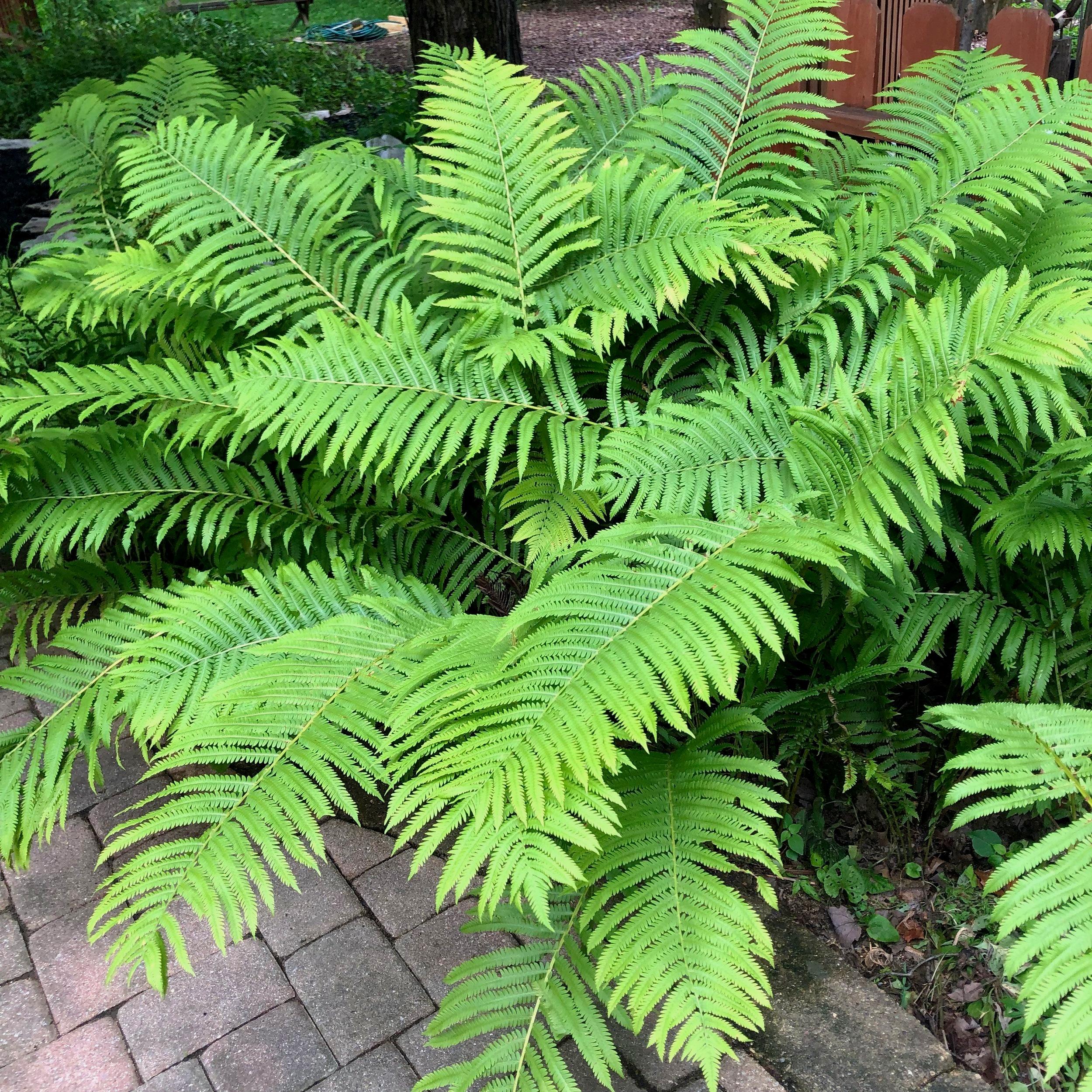 Plant Availability -