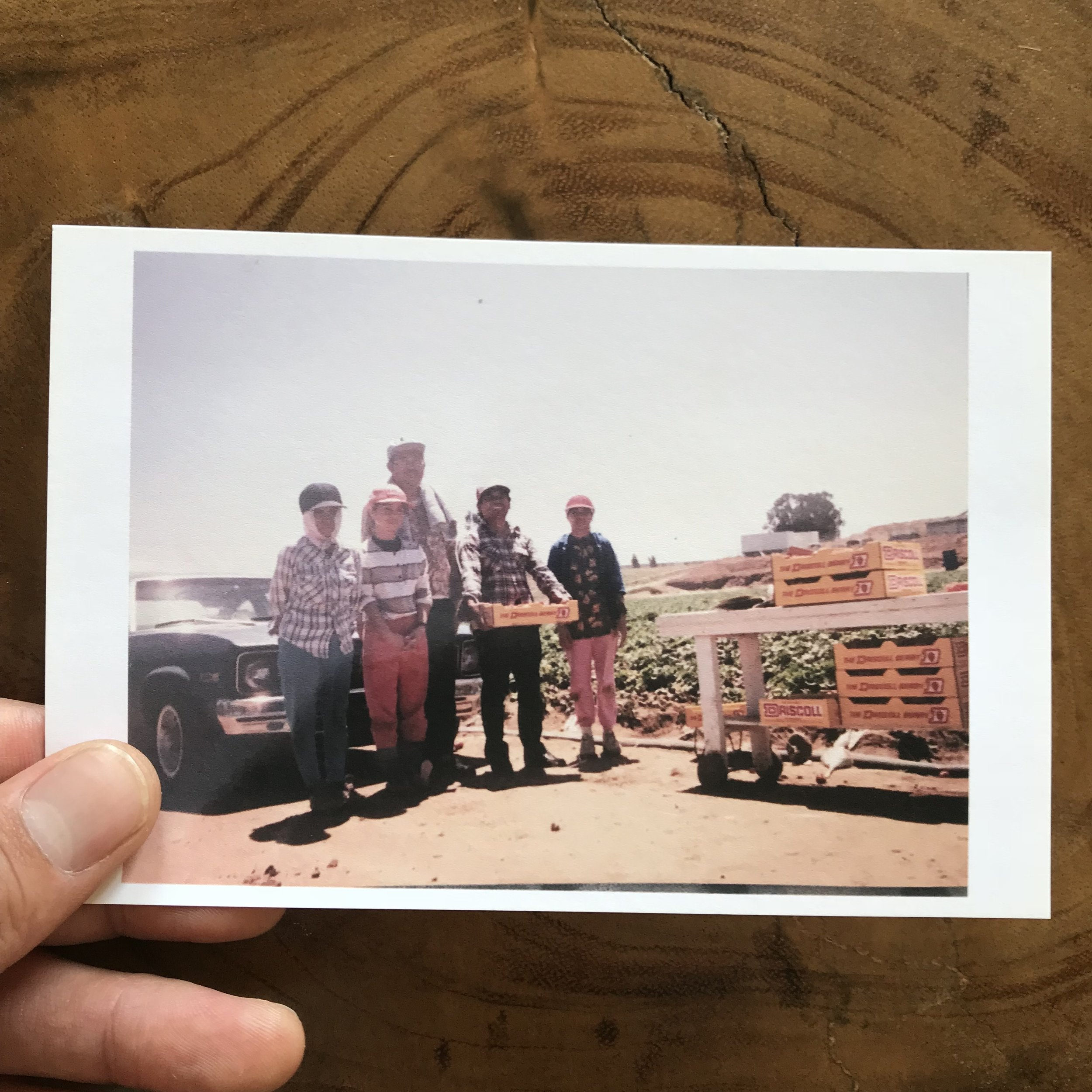 """This is a photo of my mom (pretty in pink) and some of my aunties and uncles working in the fields in the late 70's or early 80s. When my mom first immigrated here, the day after she arrived to America, she was in the fields working. She thought, """"this is America? I thought America was nice.""""  Filipinos worked in the fields for a large part of the 20th Century. Larry Itliong was a labor rights pioneer, convincing Cesar Chavez to picket and boycott the agricultural industry, starting a revolution.  My family worked for Driscoll Farms... BOYCOTT DRISCOLL FARMS! They underpay their workers — as little as $7/day, expose them to harmful chemicals, support child labor, and provide unlivable housing for their workers."""