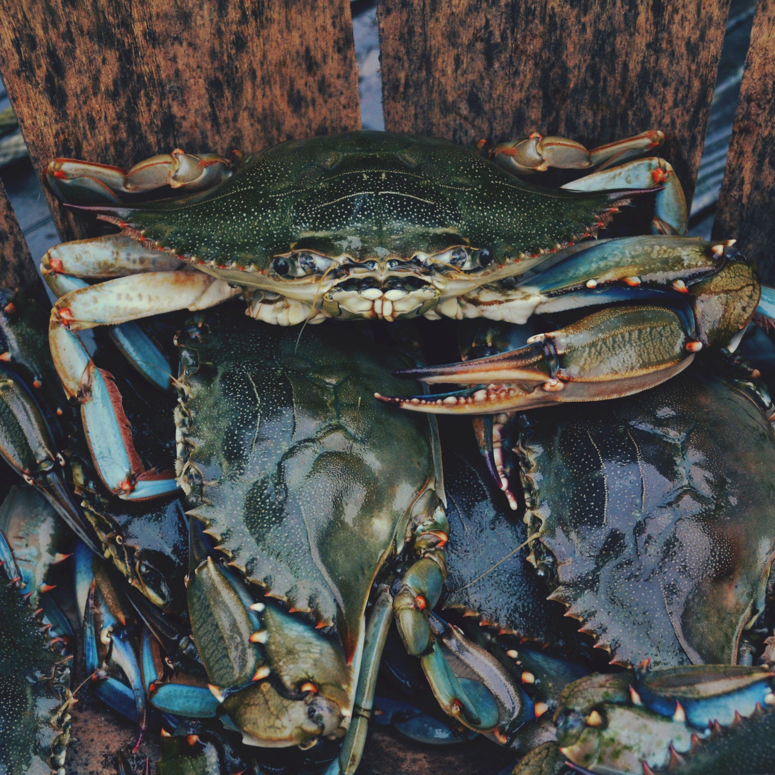 soft shell crab.jpg