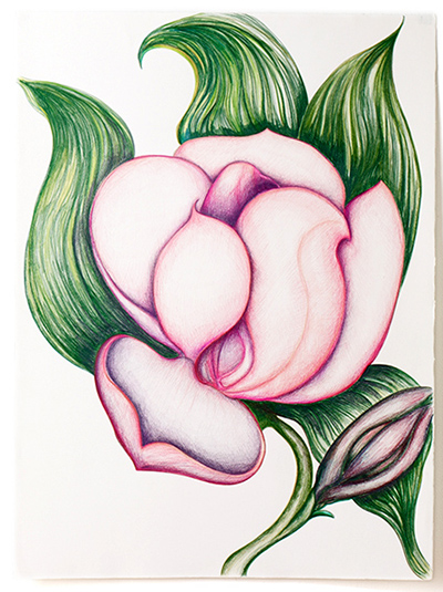 "Peony , colored pencil on BFK Reeves, 22"" x 28"""